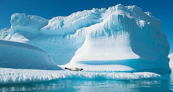 M:\картинки животных арктики\tapdaxdif4ehr9.jpg