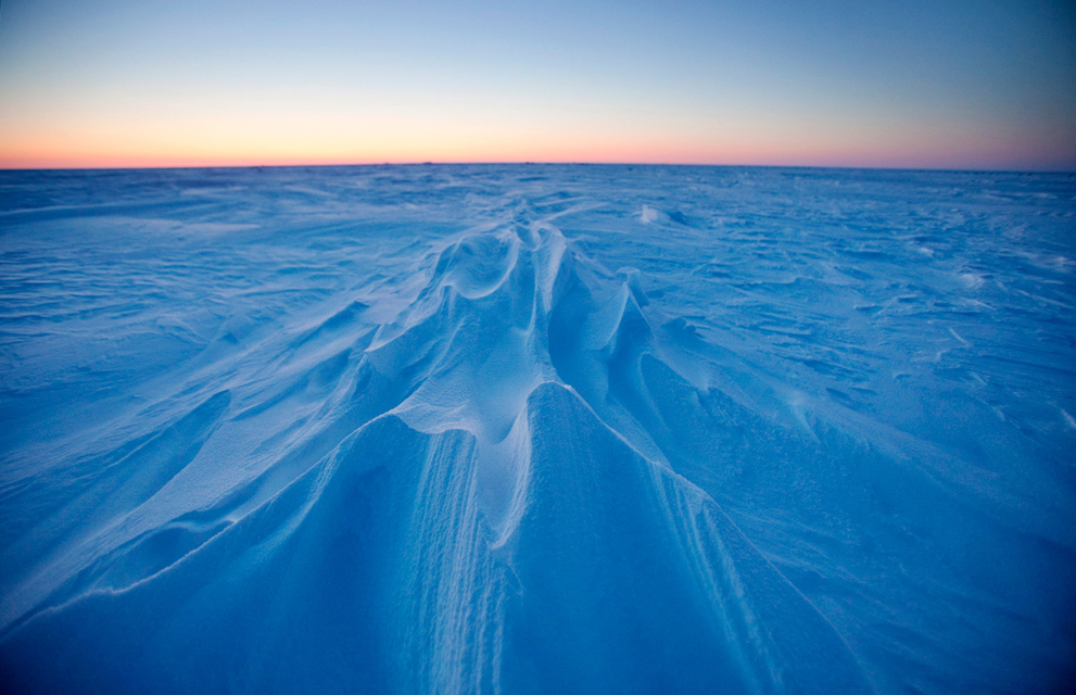 M:\картинки животных арктики\336.jpg