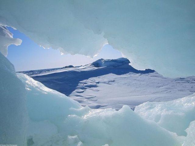 M:\картинки животных арктики\amazing-arctic-640-26.jpg