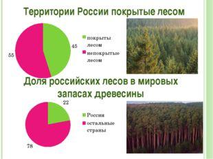 Территории России покрытые лесом Доля российских лесов в мировых запасах древ