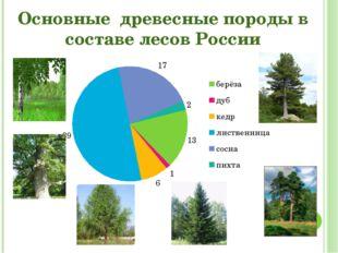 Основные древесные породы в составе лесов России