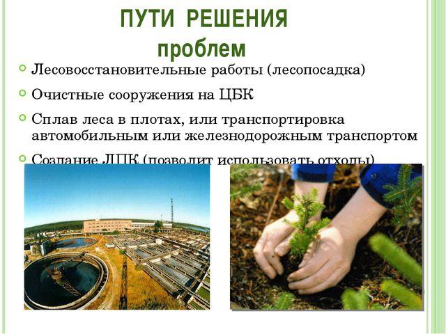 Лесовосстановительные работы (лесопосадка) Очистные сооружения на ЦБК Сплав л...