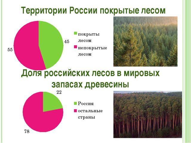 Территории России покрытые лесом Доля российских лесов в мировых запасах древ...
