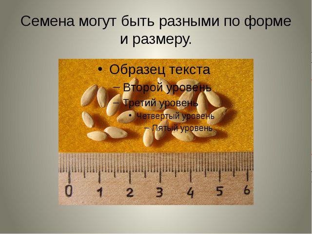 Семена могут быть разными по форме и размеру.