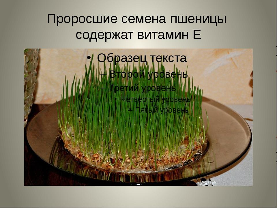 Проросшие семена пшеницы содержат витамин Е