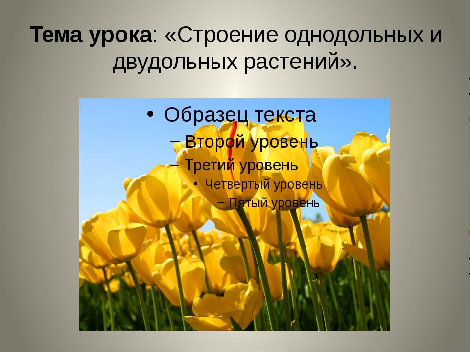 Тема урока: «Строение однодольных и двудольных растений».