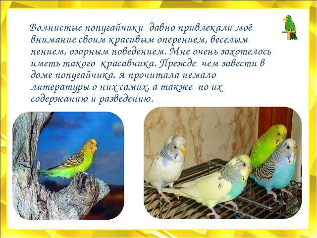 Волнистые попугайчики давно привлекали моё внимание своим красивым оперением...