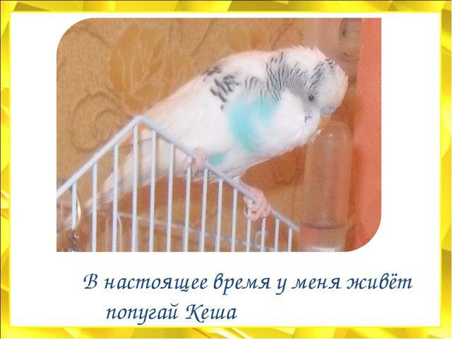 В настоящее время у меня живёт попугай Кеша