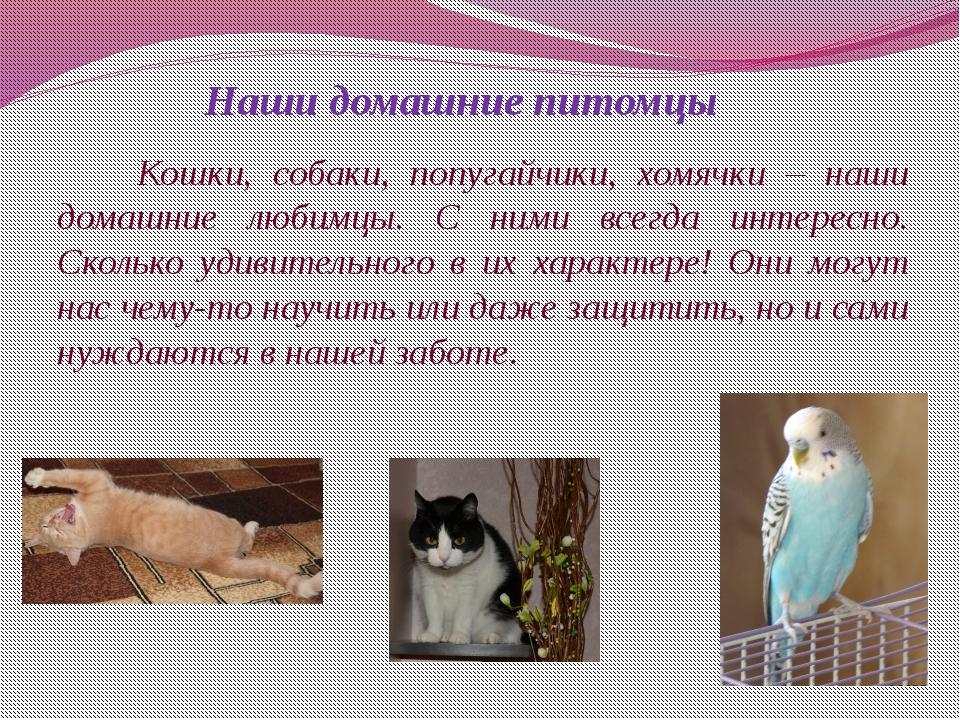 Кошки, собаки, попугайчики, хомячки – наши домашние любимцы. С ними всегда и...