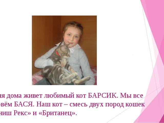 У меня дома живет любимый кот БАРСИК. Мы все его зовём БАСЯ. Наш кот – смесь...