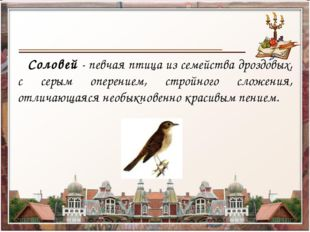 Соловей - певчая птица из семейства дроздовых, с серым оперением, стройного