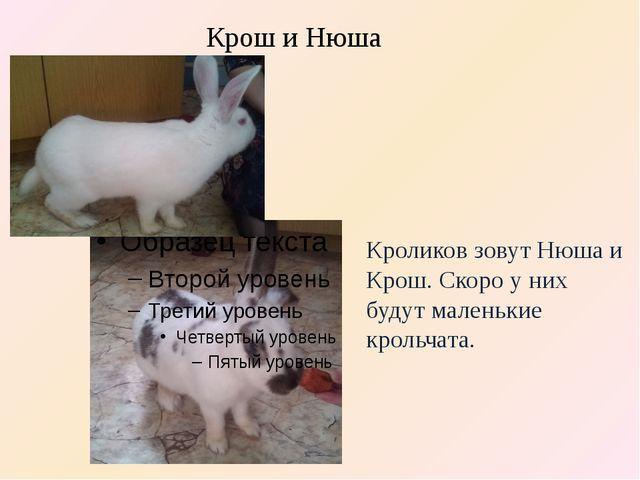 Кроликов зовут Нюша и Крош. Скоро у них будут маленькие крольчата. Крош и Нюша