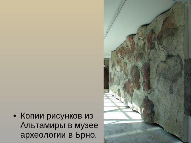 Копии рисунков из Альтамиры в музее археологии вБрно.