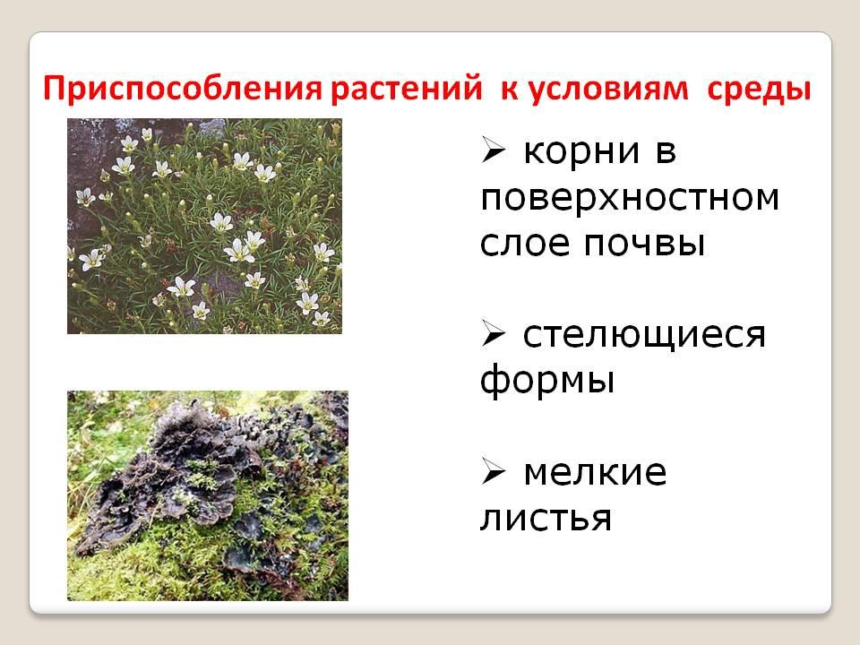 Приспособления растений к условиям среды