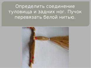 Определить соединение туловища и задних ног. Пучок перевязать белой нитью.