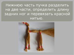 Нижнюю часть пучка разделить на две части, определить длину задних ног и пере