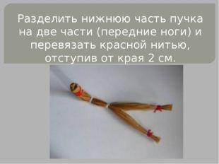 Разделить нижнюю часть пучка на две части (передние ноги) и перевязать красно