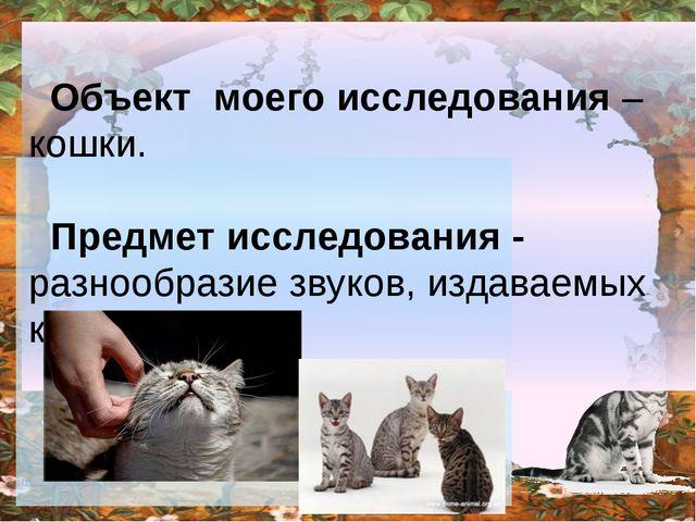 Объект моего исследования –кошки. Предмет исследования - разнообразие звуков...