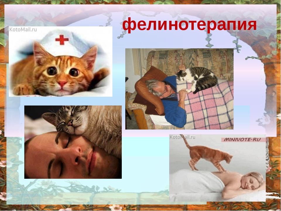 фелинотерапия http://ku4mina.ucoz.ru/