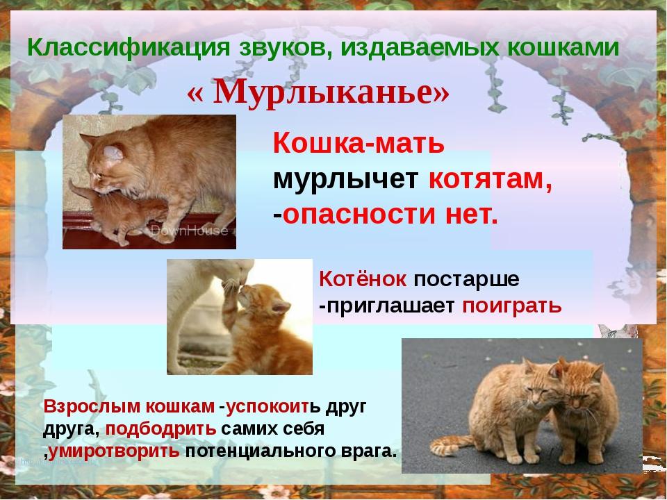 Классификация звуков, издаваемых кошками « Мурлыканье» Кошка-мать мурлычет к...