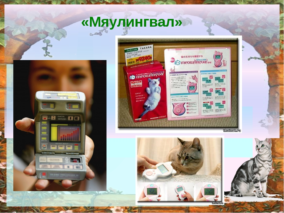 «Мяулингвал» http://ku4mina.ucoz.ru/