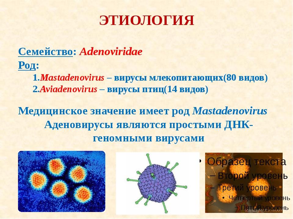 ЭТИОЛОГИЯ Семейство: Adenoviridae Род: 1.Mastadenovirus – вирусы млекопитающи...