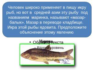 Человек широко применяет в пищу икру рыб, но вот в средней азии эту рыбу под