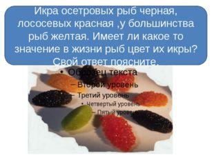 Икра осетровых рыб черная, лососевых красная ,у большинства рыб желтая. Имее