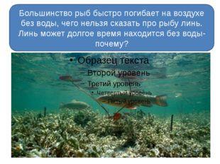 Большинство рыб быстро погибает на воздухе без воды, чего нельзя сказать про