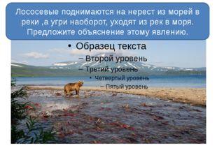 Лососевые поднимаются на нерест из морей в реки ,а угри наоборот, уходят из