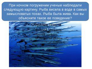 При ночном погружении ученые наблюдали следующую картину. Рыба висела в воде