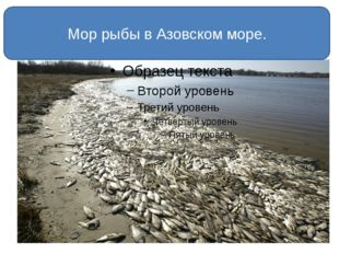 Мор рыбы в Азовском море.