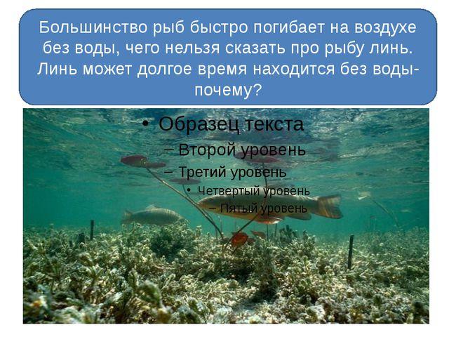 Большинство рыб быстро погибает на воздухе без воды, чего нельзя сказать про...
