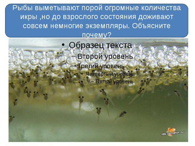 Рыбы выметывают порой огромные количества икры ,но до взрослого состояния до...