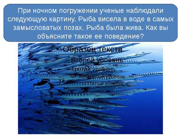 При ночном погружении ученые наблюдали следующую картину. Рыба висела в воде...