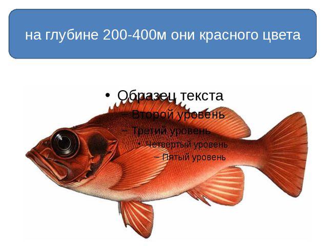 на глубине 200-400м они красного цвета