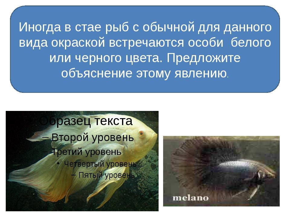 Иногда в стае рыб с обычной для данного вида окраской встречаются особи бело...