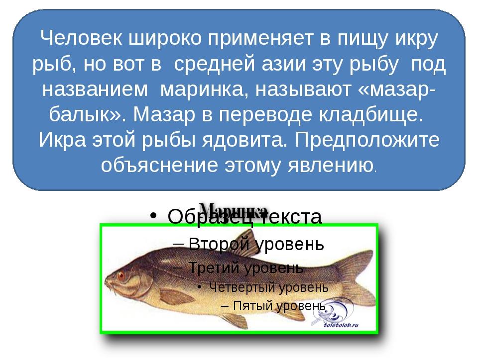 Человек широко применяет в пищу икру рыб, но вот в средней азии эту рыбу под...