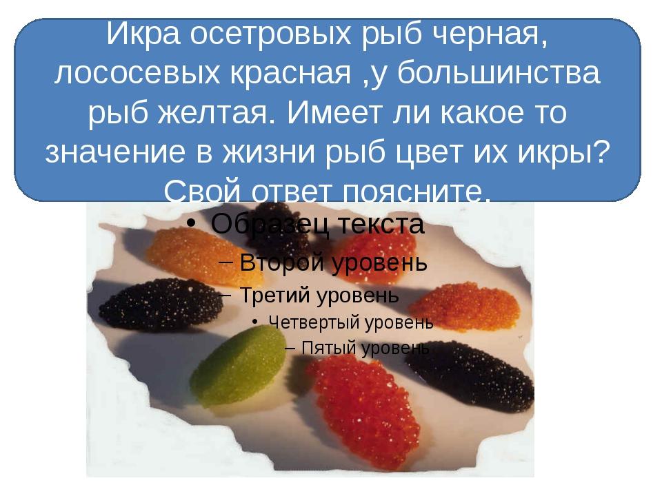 Икра осетровых рыб черная, лососевых красная ,у большинства рыб желтая. Имее...
