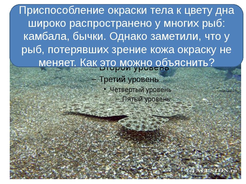 Приспособление окраски тела к цвету дна широко распространено у многих рыб:...