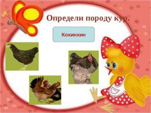 Определи породу кур. Кохинхин