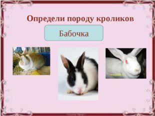 Определи породу кроликов Бабочка