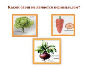 Какой овощ не является корнеплодом?