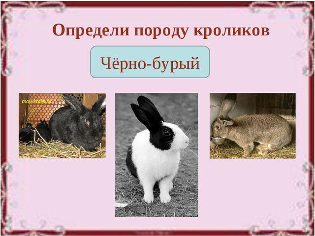 Определи породу кроликов Чёрно-бурый