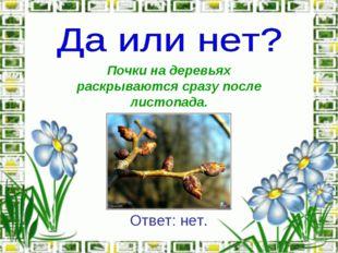 Почки на деревьях раскрываются сразу после листопада. Ответ: нет.