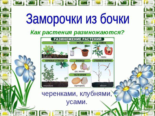 Как растения размножаются? Ответ: семенами, черенками, клубнями, усами.