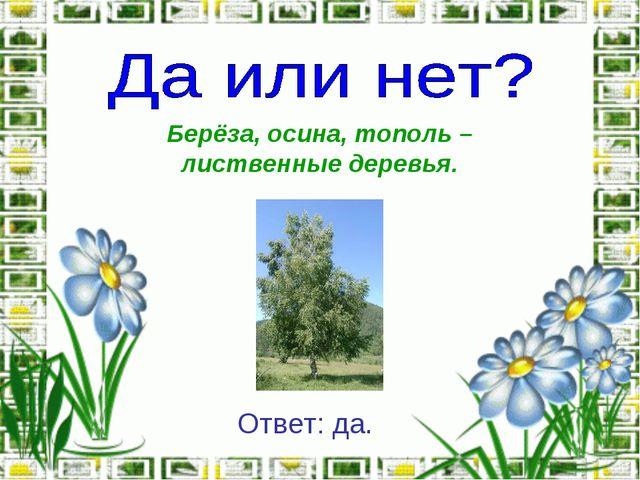 Берёза, осина, тополь – лиственные деревья. Ответ: да.