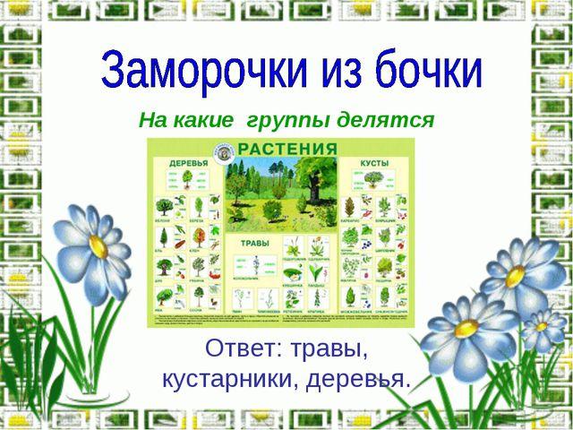 На какие группы делятся растения? Ответ: травы, кустарники, деревья.