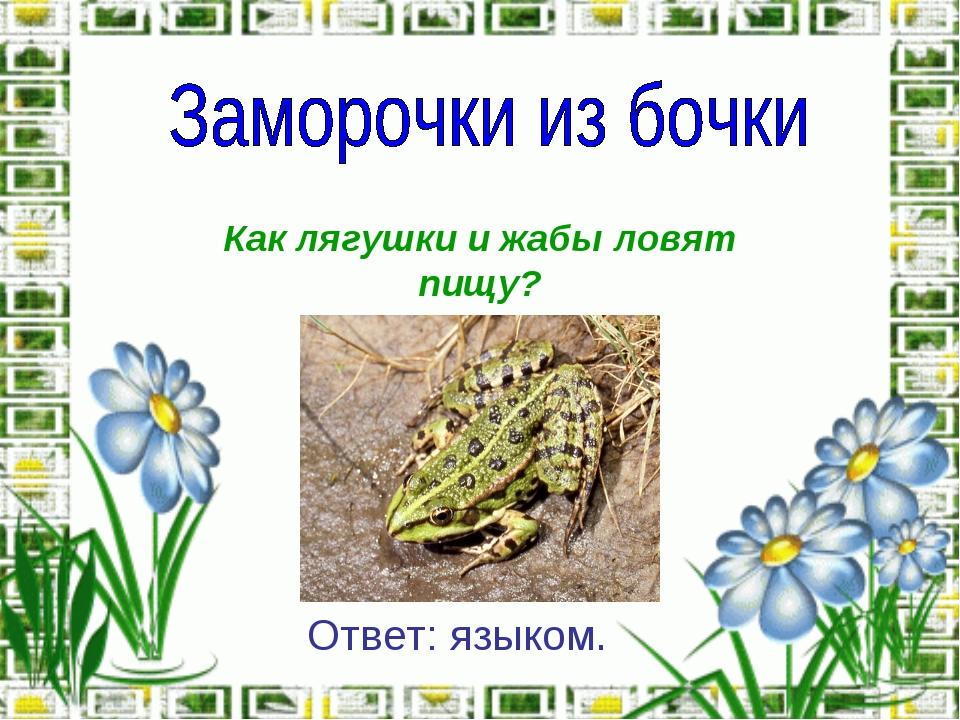 Как лягушки и жабы ловят пищу? Ответ: языком.