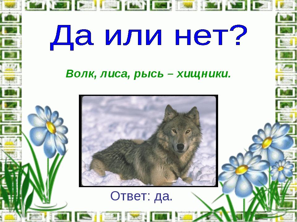 Волк, лиса, рысь – хищники. Ответ: да.